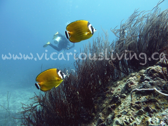 """Angel fish photo"""