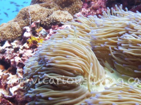 """""""soft coral photo"""""""
