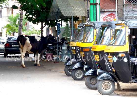 Gokulam mysore photo